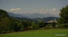 Természetfotók Karintiából - Alpesi rét