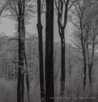 Egyenesen - téli természetfotók, havas Pilis